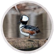 Male Hooded Merganser Dwf0166 Round Beach Towel