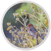 Male House Finch 7335 Round Beach Towel by Tam Ryan
