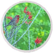 Male House Finch 8347 Round Beach Towel