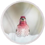 Male House Finch Round Beach Towel