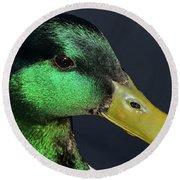 Male Mallard Duck Anas Platyrhynchos Portrait  Round Beach Towel