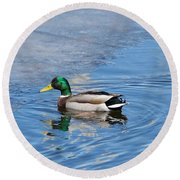 Male Mallard Duck Round Beach Towel by Michael Peychich