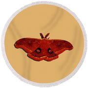 Round Beach Towel featuring the photograph Male Moth Red .png by Al Powell Photography USA