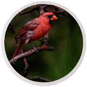 Male Northern Cardinal Round Beach Towel