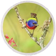 Male Painted Bunting #2 Round Beach Towel