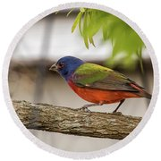 Male Painted Bunting Round Beach Towel