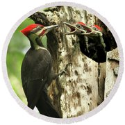 Male Pileated Woodpecker At Nest Round Beach Towel by Mircea Costina Photography
