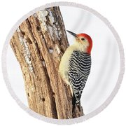 Male Red-bellied Woodpecker Round Beach Towel by Paul Miller