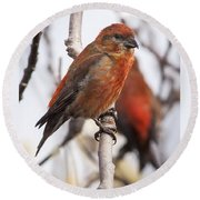 Male Red Crossbills Round Beach Towel