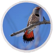 Male Red Shafted Northern Flicker Round Beach Towel