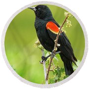 Male Red-winged Blackbird Round Beach Towel