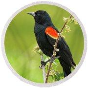 Male Red-winged Blackbird Round Beach Towel