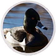 Male Ring-necked Duck Round Beach Towel