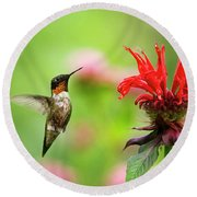 Male Ruby-throated Hummingbird Hovering Near Flowers Round Beach Towel