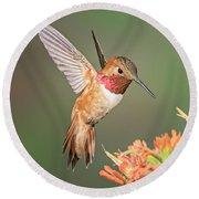Male Rufus Hummingbird Round Beach Towel