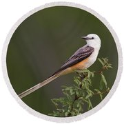 Round Beach Towel featuring the photograph Male Scissor-tail Flycatcher Tyrannus Forficatus Wild Texas by Dave Welling
