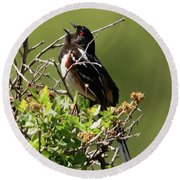 Male Spotted Towhee Round Beach Towel