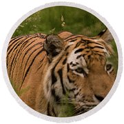 Male Tiger Round Beach Towel