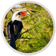 Male Von Der Decken's Hornbill Round Beach Towel by Adam Romanowicz