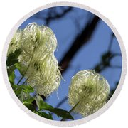 Round Beach Towel featuring the photograph Old Man's Beard by Ed Clark