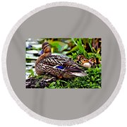 Round Beach Towel featuring the mixed media Mallard And Chicks by Charles Shoup