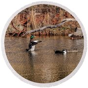 Mallard Duck Round Beach Towel by Doug Long