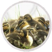 Round Beach Towel featuring the photograph Mallard Ducklings by Angie Rea