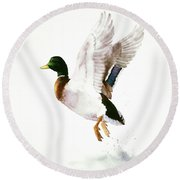 Mallard Flying Away Watercolor Round Beach Towel