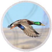Mallard Flying Over Round Beach Towel