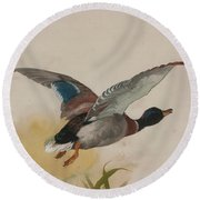 Mallard In Flight Round Beach Towel