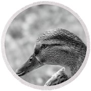 Mallard In Monochrome Round Beach Towel