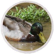 Round Beach Towel featuring the photograph Mallard Madness by Kathy Kelly