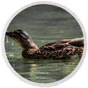 Mallard Sipping Water Round Beach Towel by Ray Congrove