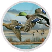 Round Beach Towel featuring the painting Mallards In Flight by Mike Brown