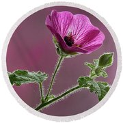 Mallow Flower 3 Round Beach Towel