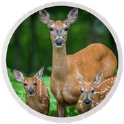 Mama And Fawns Round Beach Towel