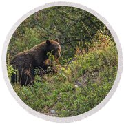 Mama Bear Loves Summer Berries Round Beach Towel by Yeates Photography