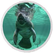 Manatee Breathing Round Beach Towel