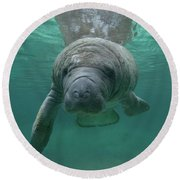 Manatee Round Beach Towel