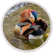 Mandarin Duck Preening Feathers Round Beach Towel