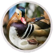 Mandarin Duck Raising One Foot. Round Beach Towel