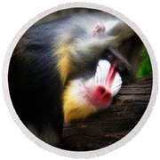 Mandrill Baboon Round Beach Towel by Lana Trussell