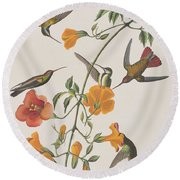Mango Humming Bird Round Beach Towel by John James Audubon