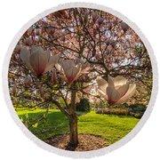 Manito Magnolia In Bloom Round Beach Towel