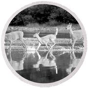 Round Beach Towel featuring the photograph Many Glacier Deer 1 by Adam Jewell