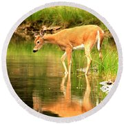 Round Beach Towel featuring the photograph Deer Reflections In Fishercap by Adam Jewell