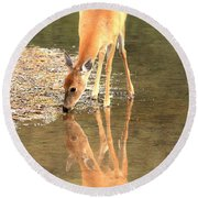 Round Beach Towel featuring the photograph Deer Reflections by Adam Jewell