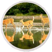 Round Beach Towel featuring the photograph Many Glacier Deer 2 by Adam Jewell