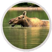 Round Beach Towel featuring the photograph Many Glacier Moose 1 by Adam Jewell