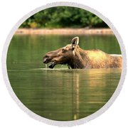 Round Beach Towel featuring the photograph Many Glacier Moose 2 by Adam Jewell